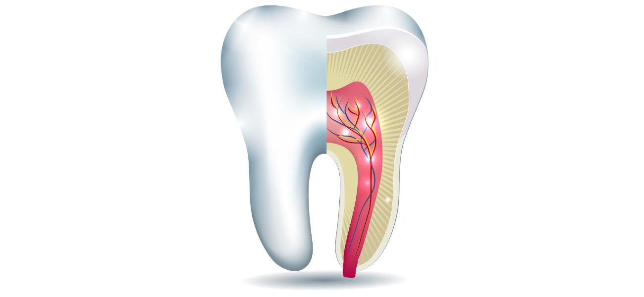 Endodontija - zdravljenje zob